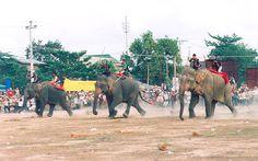 Buon Don Elephant Race - Vietnam
