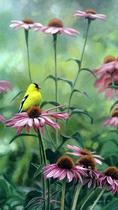 Terry Isaac Posy Petal Goldfinch echinacea realist painting