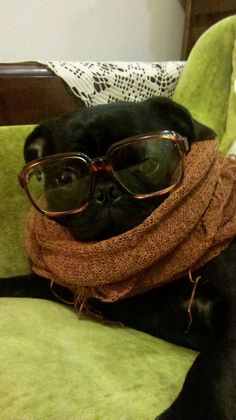"""For a 'social anthropology experiment,' marcus will be attending the gathering of the puggalos."" - Hipster Puppies"