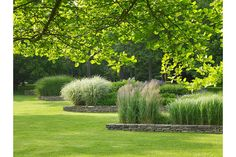 As an example of borders, exuberant ornamental grasses stand in sharp contrast above the manicured turf. Grasses featured here include Calamagrostis x acutiflora 'Karl Foerster,' Miscanthus sinensis, and Molinia caerulea subsp. arundinacea 'Windspiel.'