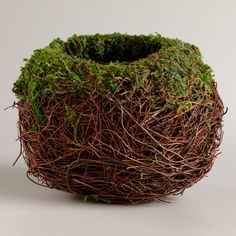 Round Mossy Nest   World Market, would be so cute with spring bulbs planted inside