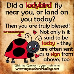 Angel Signs - Image quotes - Signs from the Angels - Signs from passed loved ones - Heaven - Page 9 - Mary Jac love Sign Quotes, Me Quotes, Angel Quotes, Quotable Quotes, Ladybug Quotes, Signs From Heaven, Ladybug Art, Sign Image, Spirit Guides