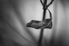 Fragile. Black and White fine art photography
