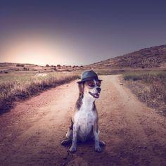 Fotógrafo registra cães resgatados