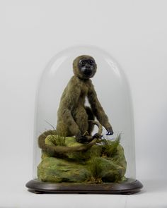 victorian taxidermy collections under glass domes   ... taxidermy entomology other things victorian glass domes books glass