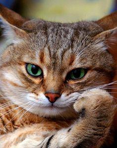 Картинка 632x799 | Картинка с котом на рабочий стол | Животные, фото#картинки#фото#животные#коты#кошки#портрет#няша