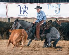 ONCE IN A BLU MOON....... With James Payne aboard, the stallion won the Classic/Challenge Open at the National Cutting Horse Association (NCHA) Summer Spectacular on July 18, earning nearly $40,000.