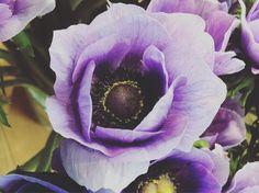 Les fleurs d'Aline Quelques Photos, Boutique, Vegetables, Rose, Plants, Flowers, Pink, Vegetable Recipes, Plant