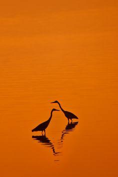 Shore birds on Lake Nakuru, Kenya Orange Aesthetic, Rainbow Aesthetic, Aesthetic Colors, Jaune Orange, Orange Yellow, Orange Color, Orange Zest, Pink Lila, Orange Wallpaper