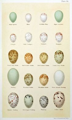 Wren Eggs | Here are some smaller eggs. They are Wren, Nuthatch, etc... Every one ...