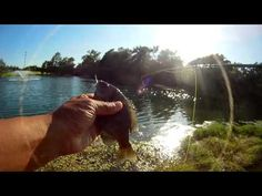 Two Weight Keeps Doing Well - Stocker Trout Fishing Stocker Trout Fishing