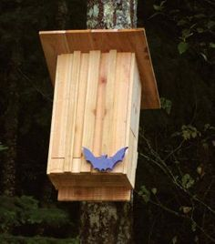 suitable as summer and winter quarters. weatherproof untreated screwed Wild animal heart bat box made from solid wood bat house and nesting box for bats