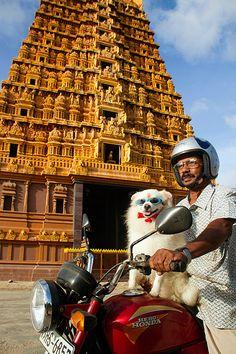 Nallur Kandaswamy Kovil on http://srilanka.for91days.com