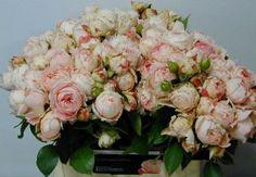 Lady Rose Pompon Raab Rosen