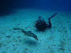 Scuba Diver Girls | Cutie Sea Turtle