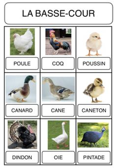 Vocabulary - The Farm - montessori - Makaron Web Animal, French Education, Language And Literature, Learning Time, Farm Theme, Science And Nature, Farm Animals, Montessori, Activities For Kids
