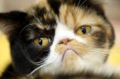 Pourquoi mon chat miaule sans arrêt? Découvrez les 15 raisons