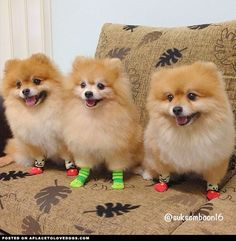 They are wearing socks... So happy! Lol