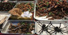 Perché gli insetti sono il futuro dell'alimentazione? Ebbene sì, anche gli insetti faranno parte della nostra linea alimentare...