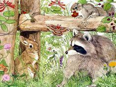 Penny Parker Images - raccoon & friends