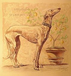 """""""Galgo e Limoni"""" pen & ink with watercolour, by Jo Campin."""