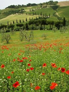 Tuscan scenery, La Foce in The Val d Orcia, Siena