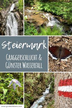 Unsere Tipps zum Naturpark Zirbitzkogel – Grebenzen. Graggerschlucht Wasserweg mit der europaweit ersten Bionikinsel mit vielen Erlebnisstationen. Ein Ausflugstipp für die ganze Familie. Der Günster Wasserfall ist mit einer Fallhöhe von 65 Metern der höchste Wasserfall der Steiermark und zählt zu den schönsten Wasserfällen im grünen Herzen Österreichs. www.gindeslebens.com #WandernSteiermark #NaturparkZirbitzkogelGrebenzen #Wasserfall Tromso, Bergen, Gin, Germany, Outdoor Decor, Inspiration, Adventure Travel, Wish List, Waterfall