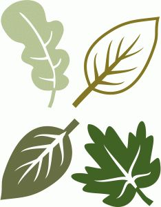 Silhouette Design Store - View Design leaves with veins Silhouette Cameo, Silhouette Online Store, Silhouette Projects, Silhouette Design, Leaf Template, Flower Template, Owl Templates, Crown Template, Butterfly Template