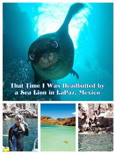 Sure enough, within minutes, two playful baby sea lions began to swim in circles around me. http://luggageandlipstick.com/snorkel-la-paz/