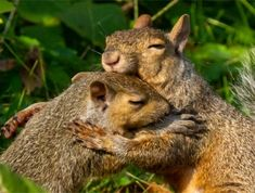 September 2018 - forest preserve district of will county - photo contest wi Cute Animal Quotes, Cute Animal Videos, Cute Animal Pictures, Cute Animals Puppies, Cute Baby Animals, Funny Animals, Cheer Up Pictures, Tree Rat, Animal Hugs