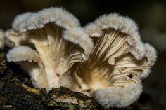 Mushrooms Rain Season by NC3X