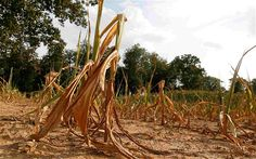 World on track for record food prices 'within a year' due to US drought