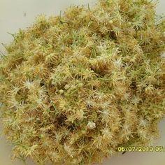 Lindenblüten- Gelee und -Sirup