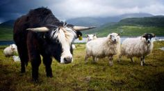 whos you looking at by mhairi carroll