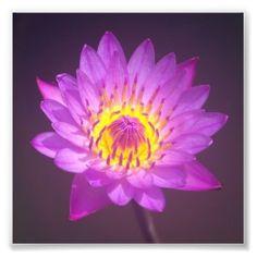#Purple #Lotus #Flower #Photo #Print
