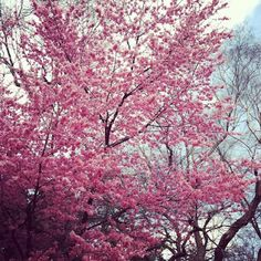 Spring Trees can be so gorgeous!!