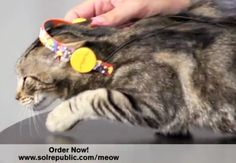 headphones for cats!  www.solrepublic.com/meow