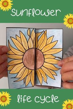 Re-cap the stages of a sunflower's life cycle with this fun folding craft. Print the black and white template onto paper or card for pupils to colour and cut out. No glue or tape required! Diy Arts And Crafts, Diy Crafts For Kids, Kindergarten Activities, Preschool Activities, Science For Kids, Art For Kids, Sunflower Life Cycle, Butterfly Life Cycle, Life Cycle Craft