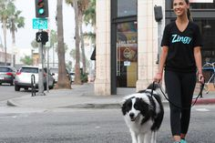 Dog-walking on demand? Zingy makes life easier for pet owners