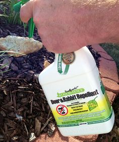 Keep deer and rabbits away from your garden with Liquid Fence. Garden Club Editor Michael Nolan strongly recommends this eco-friendly repellent. Available in spray or pellet form, the product line also includes repellents for dogs, cats, even snakes!