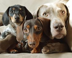 Harlow, Indiana & Reese are nominated for a World Dog Award! See if they win on Thursday, January 14, 2016 on The CW.