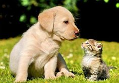 Perfect Teeth, Perfect Smile, Cute Kittens, Best Friends Forever, Pet Grooming, Pet Care, Puppy Care, Labrador Retriever, Dog Cat