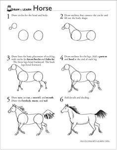 How to draw a horse, and learn about its characteristics. Step-by-step drawing instructions on one side, and science facts plus more original drawings by Dawn Pedersen on the other side. Realistic Animal Drawings, Cool Art Drawings, Horse Drawings, Pencil Art Drawings, Drawing Sketches, Easy Drawings, Drawing Art, Easy Horse Drawing, Horse Drawing Tutorial
