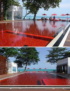 Blood Red pool on the island of Koh Samui. Oh, and the hotel is called the Library.