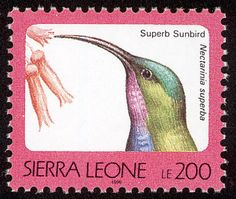 Superb Sunbird stamps - mainly images - gallery format