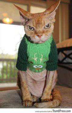 How I feel when invited to a tacky Christmas sweater party.