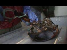 Lobster Fishing in Meteghan Nova Scotia Grade 2 Science, Lobster Fishing, Social Studies Curriculum, Amazing Race, Educational Videos, Nova Scotia, Social Skills, School Stuff, Classroom Ideas