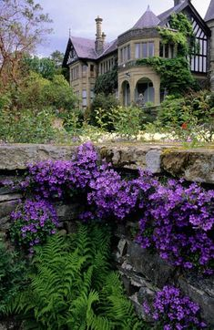 Bodnant, North Wales. Rose terrace with Campanula poscharskyana growing in stone cracks and crevices.  Photo by John Glover