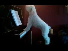 Cãozinho dos teclados AAAAAAAAAU! - YouTube
