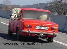 i can just put this horse in my back seat.....no problem.....??,